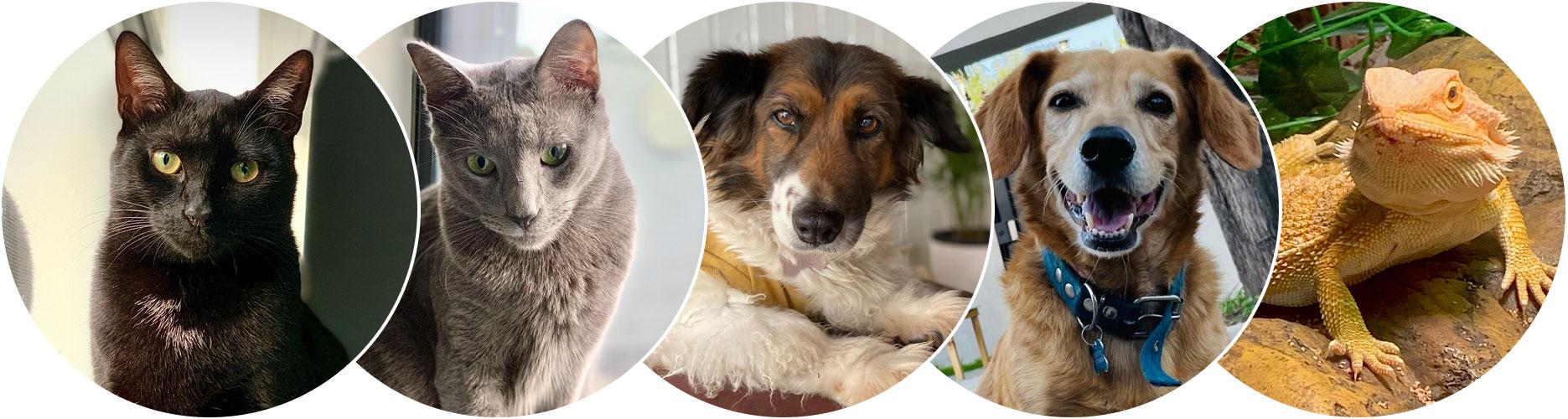 Projekt Group - Our Pets